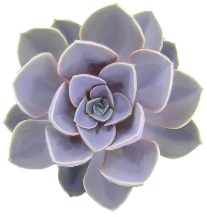 succulent_top_view